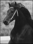 Black Horse Pike